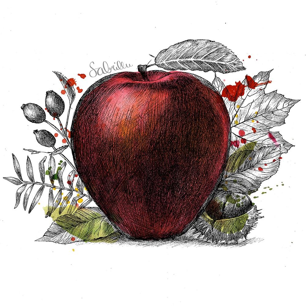 Tusche-Aquarellzeichnung Apfel