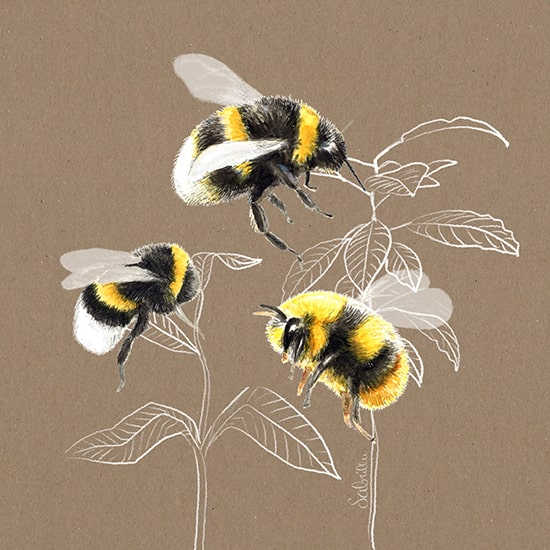 How to draw cute bees with watercolours