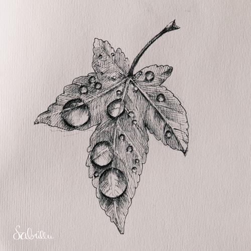 Leaf with water drops - pen & ink sketch - Tusche zeichnen Skizze