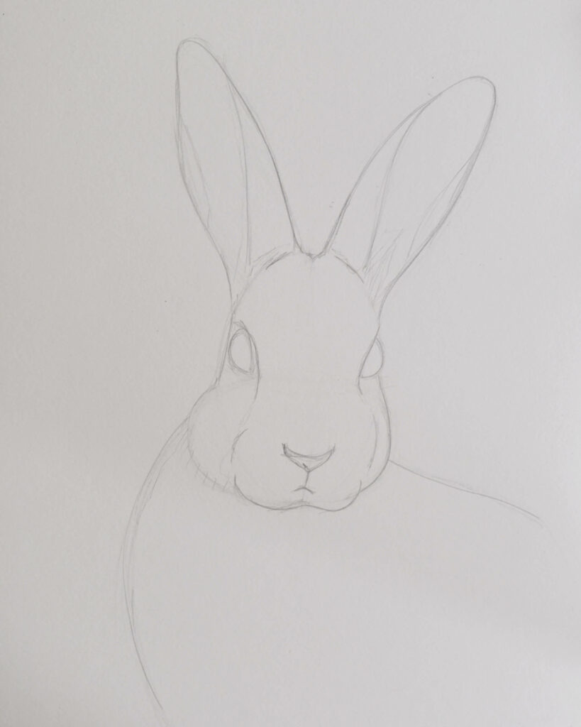 How to draw a rabbit with pencils - outlines - rough sketch