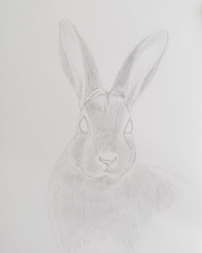 Hase zeichnen mit Bleistift - leichtes Schattieren