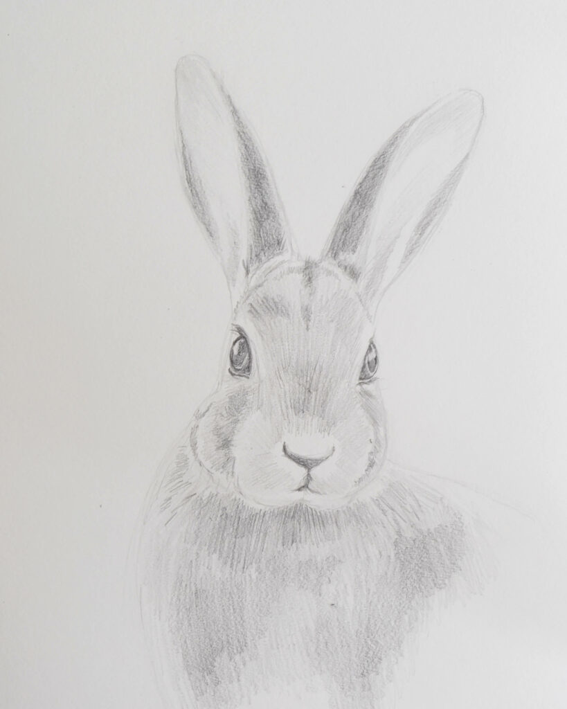 Draw a realistic rabbit with different pencils