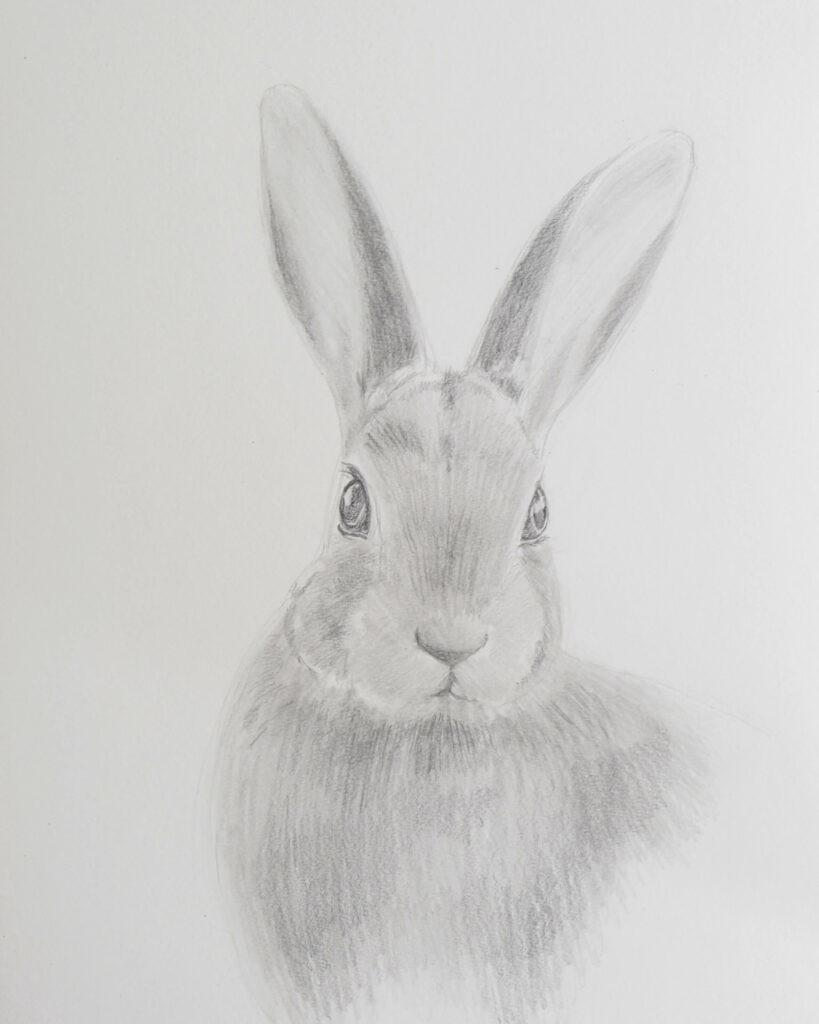 graphite drawing of a rabbit