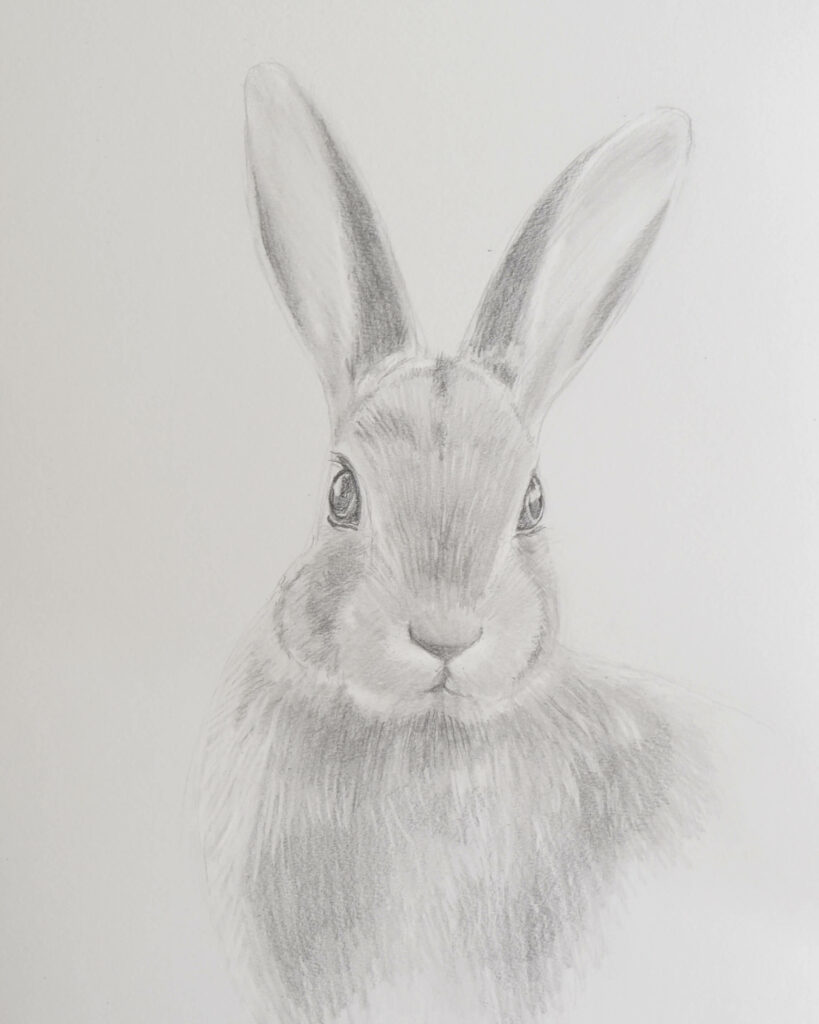 Rabbit drawing step 6 - how to draw a rabbit with pencils