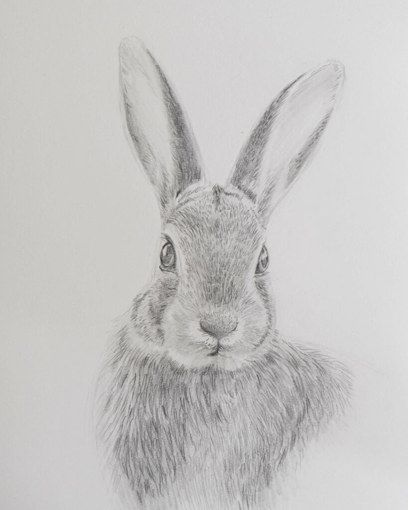 graphite drawing of a rabbit - video tutorial