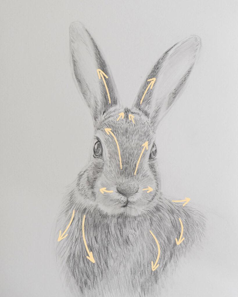 Bleistiftzeichnung Hase - Fell