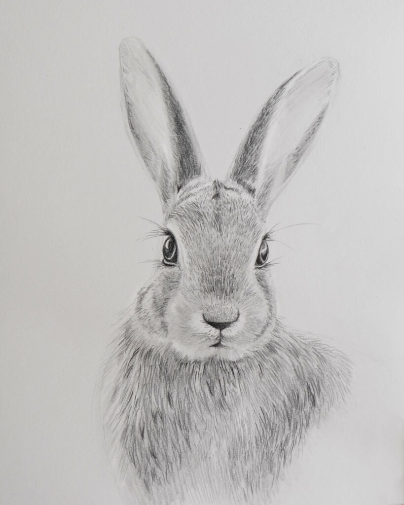 easter bunny drawing with pencils