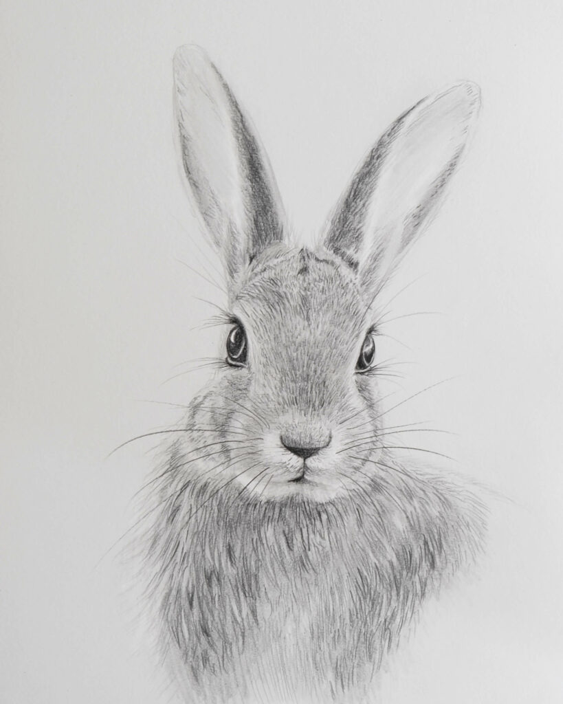 draw a realistic bunny with graphite